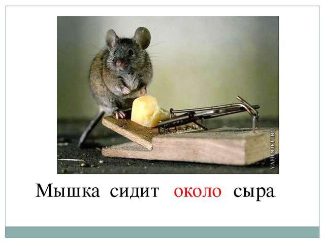 Мышка сидит … сыра. около