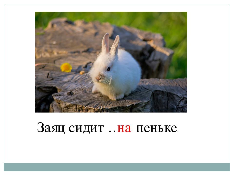 Заяц сидит … пеньке. на