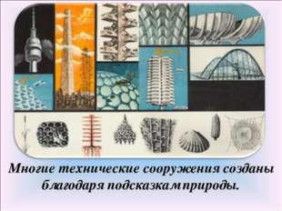 Многие технические сооружения созданы благодаря подсказкам природы.