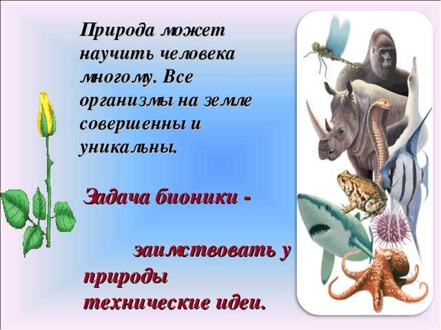 Природа может научить человека многому. Все организмы на земле совершенны и у...