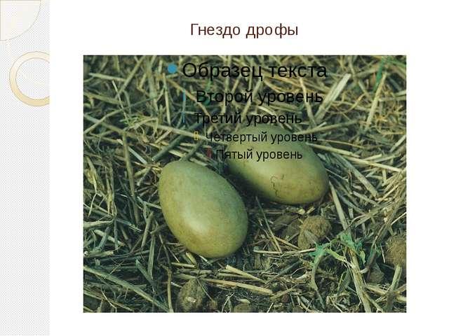 Гнездо дрофы