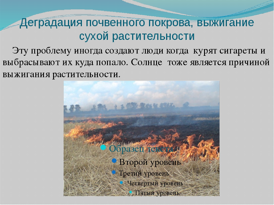Деградация почвенного покрова, выжигание сухой растительности Эту проблему ин...