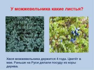 У можжевельника какие листья? Хвоя можжевельника держится 4 года. Цветёт в ма