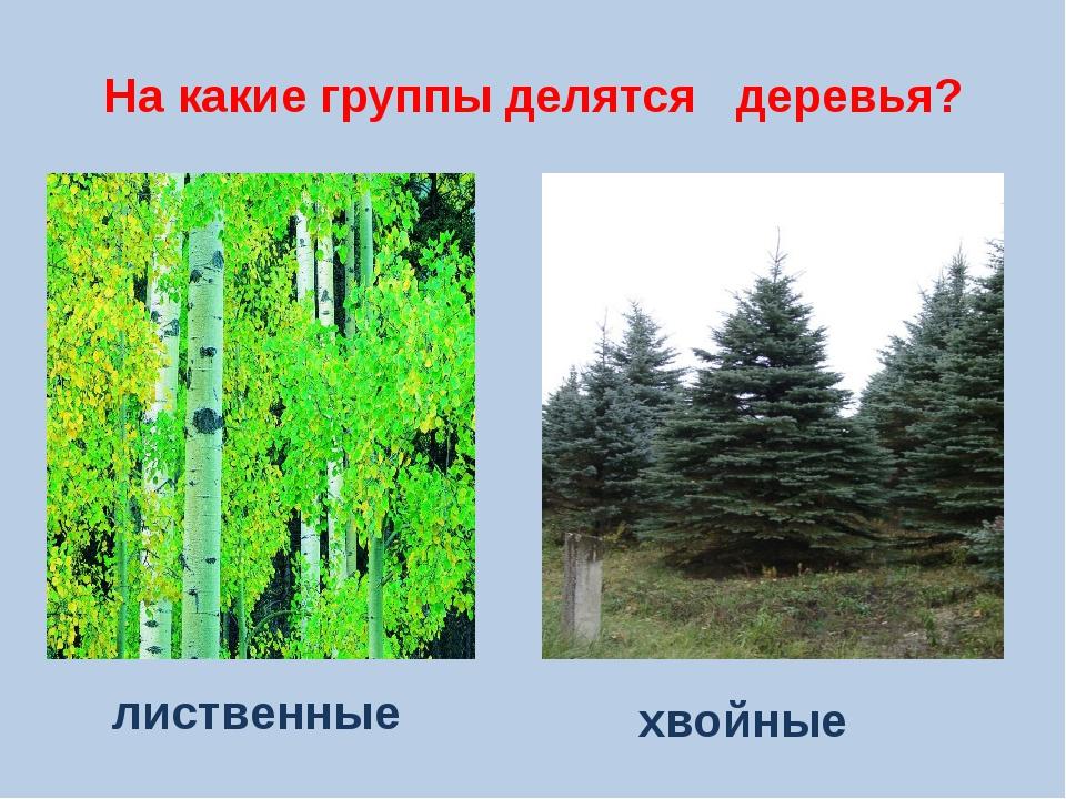 На какие группы делятся деревья? лиственные хвойные