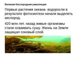 Великая Кислородная революция Первые растения океана- водоросли в результате