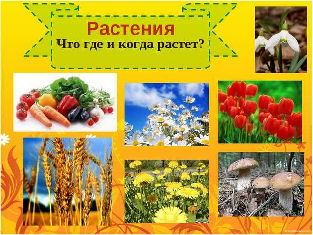 Растения Что где и когда растет?