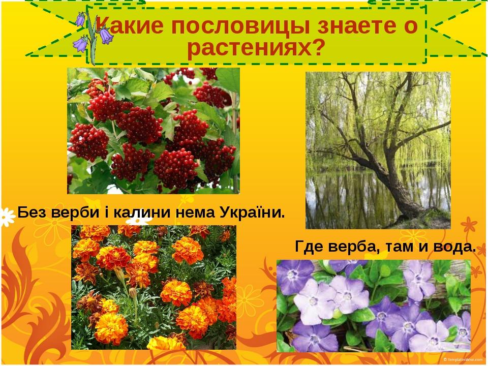 Какие пословицы знаете о растениях? Где верба, там и вода. Без верби і калин...