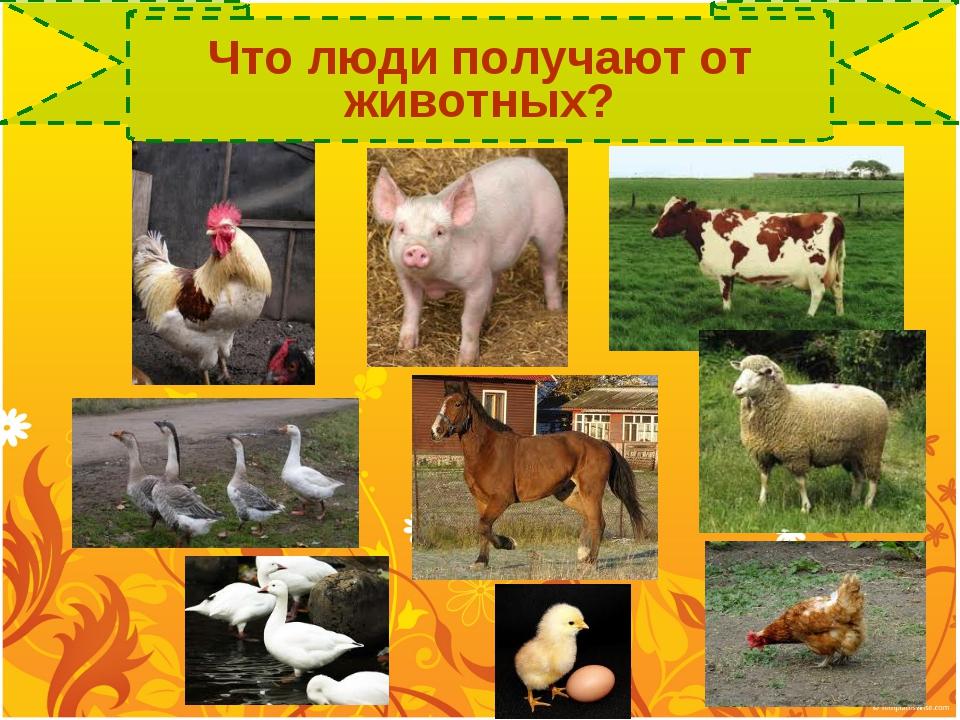 Что люди получают от животных?
