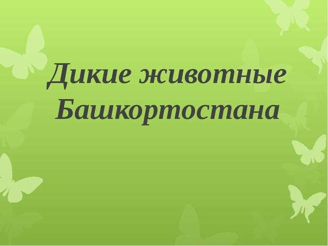 Дикие животные Башкортостана