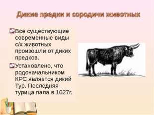 Все существующие современные виды с/х животных произошли от диких предков. Ус