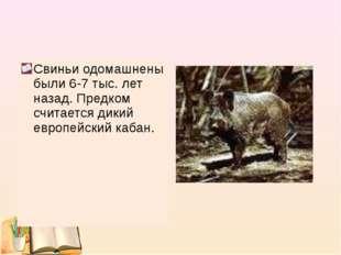 Свиньи одомашнены были 6-7 тыс. лет назад. Предком считается дикий европейски