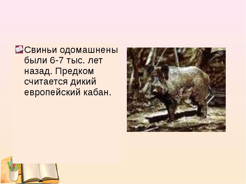 Свиньи одомашнены были 6-7 тыс. лет назад. Предком считается дикий европейски...