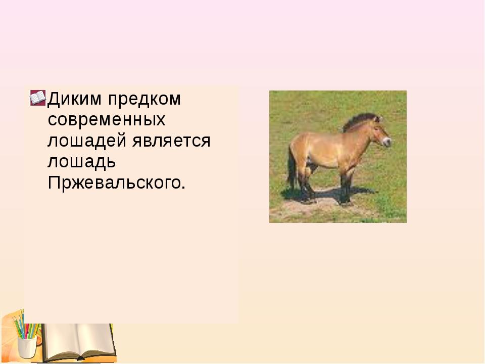 Диким предком современных лошадей является лошадь Пржевальского.