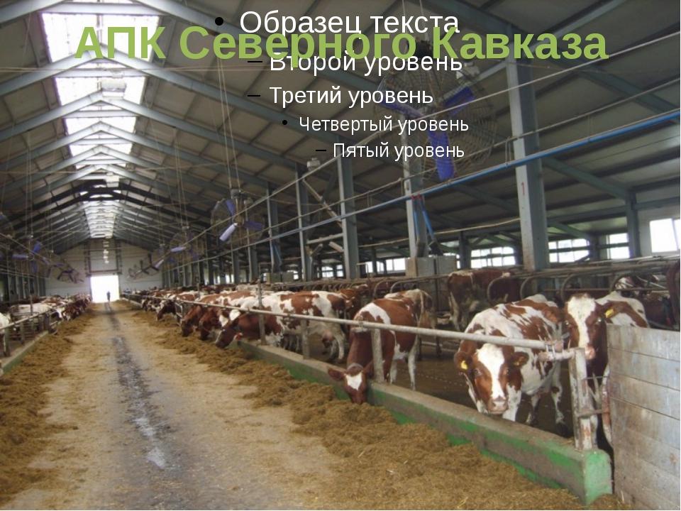 АПК Северного Кавказа