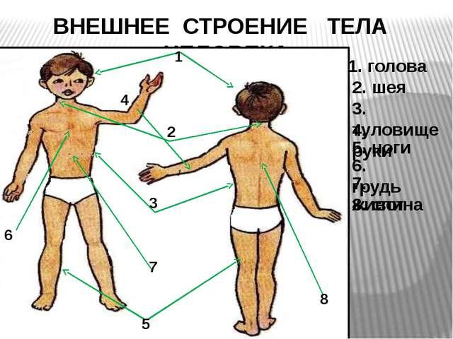 Строение тела человека тест 2 класс