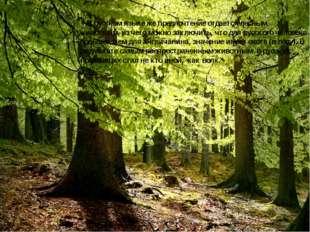 В русском языке же предпочтение отдается лесным животным, из чего можно заклю