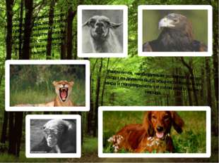 На общности человеческих наблюдений над характером и повадками животных и осн
