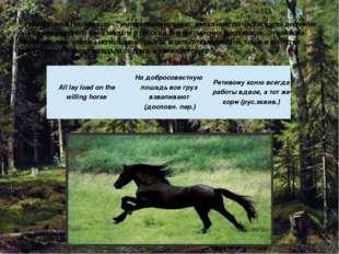 """Лошадь же в пословицах - """"интернациональное"""" животное: по частоте употреблени"""