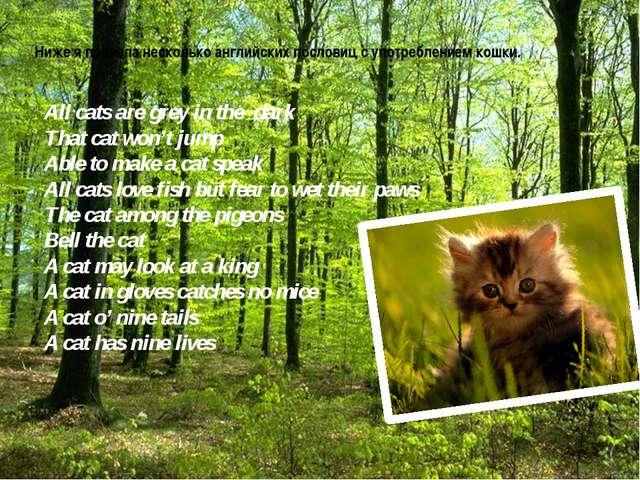 Ниже я привела несколько английских пословиц с употреблением кошки. All cats...