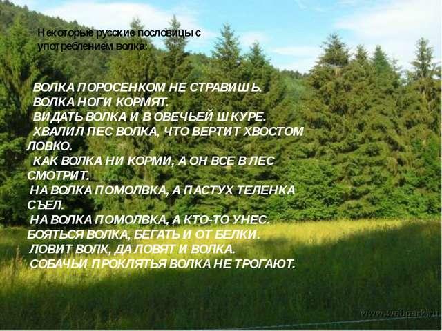 Некоторые русские пословицы с употреблением волка: ВОЛКА ПОРОСЕНКОМ НЕ СТРАВИ...