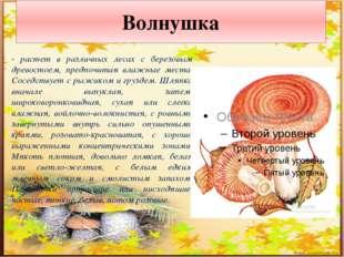Подосиновик - в разных местах этот гриб зовут по-своему: осиновик, красный гр