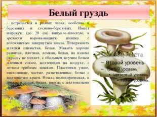 Белый груздь - встречается в разных лесах, особенно в березовых и сосново-бер
