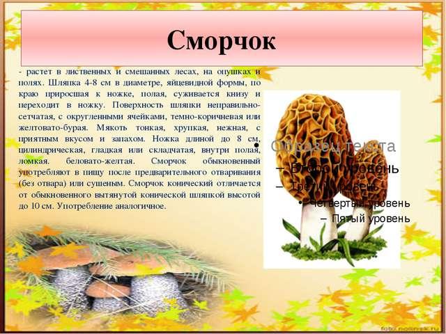 Сморчок - растет в лиственных и смешанных лесах, на опушках и полях. Шляпка 4...