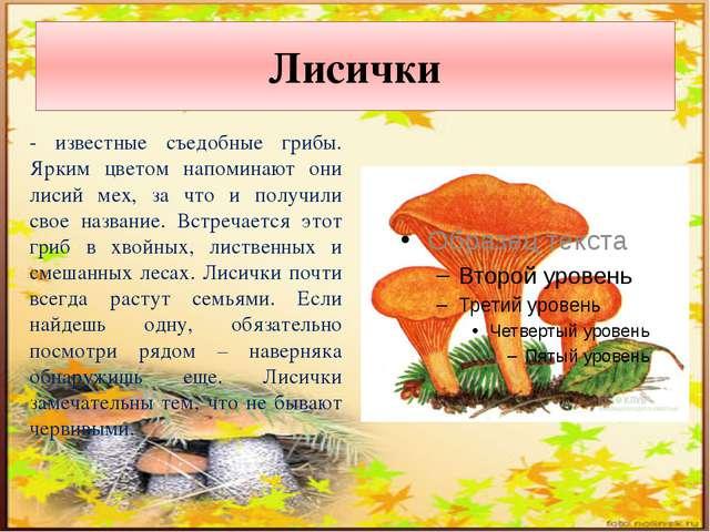 Лисички - известные съедобные грибы. Ярким цветом напоминают они лисий мех, з...