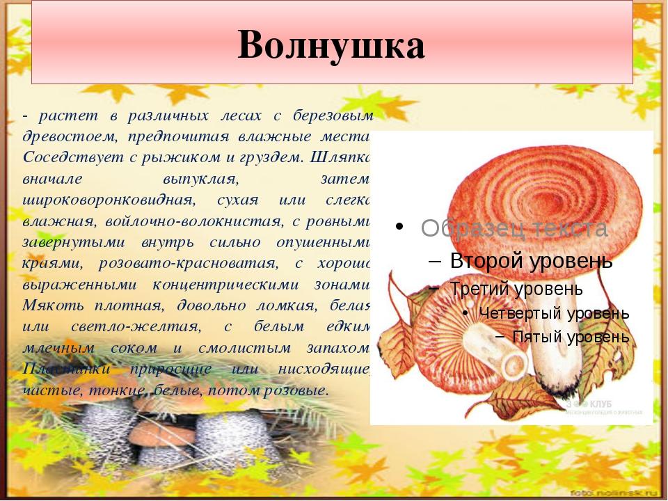 Подосиновик - в разных местах этот гриб зовут по-своему: осиновик, красный гр...