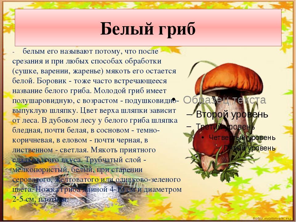 Белый гриб - белым его называют потому, что после срезания и при любых способ...