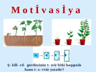 M o t İ v a s İ y a Şəkillərdə gördüyünüz təsvir bitki haqqında hansı təsəvvü