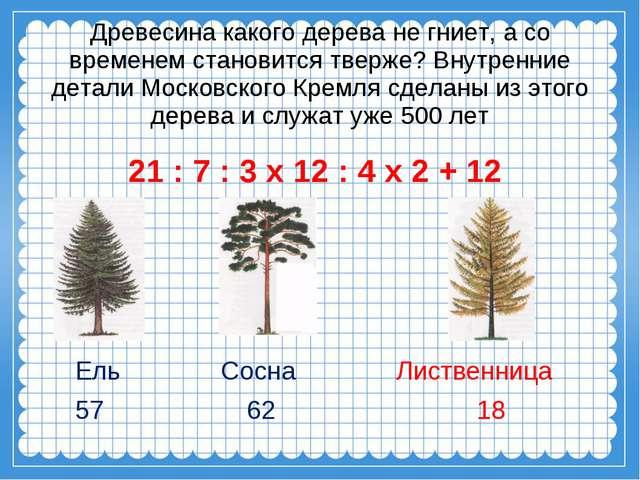 Древесина какого дерева не гниет, а со временем становится тверже? Внутренни...