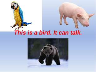This is a bird. It can talk.