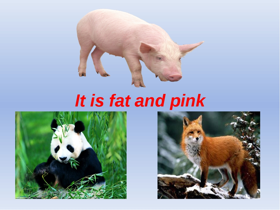 It is fat and pink