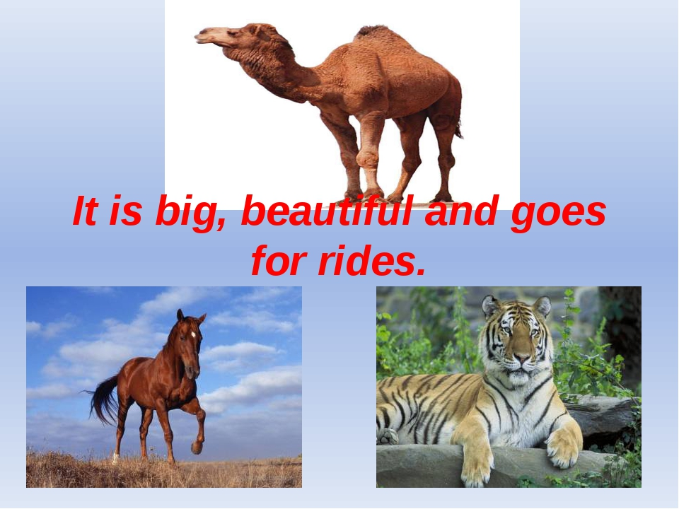 It is big, beautiful and goes for rides.