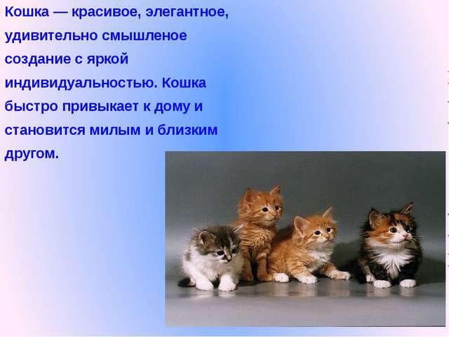 Кошка — красивое, элегантное, удивительно смышленое создание с яркой индивиду...