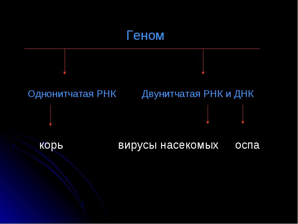 Геном Однонитчатая РНК Двунитчатая РНК и ДНК корь вирусы насекомых оспа