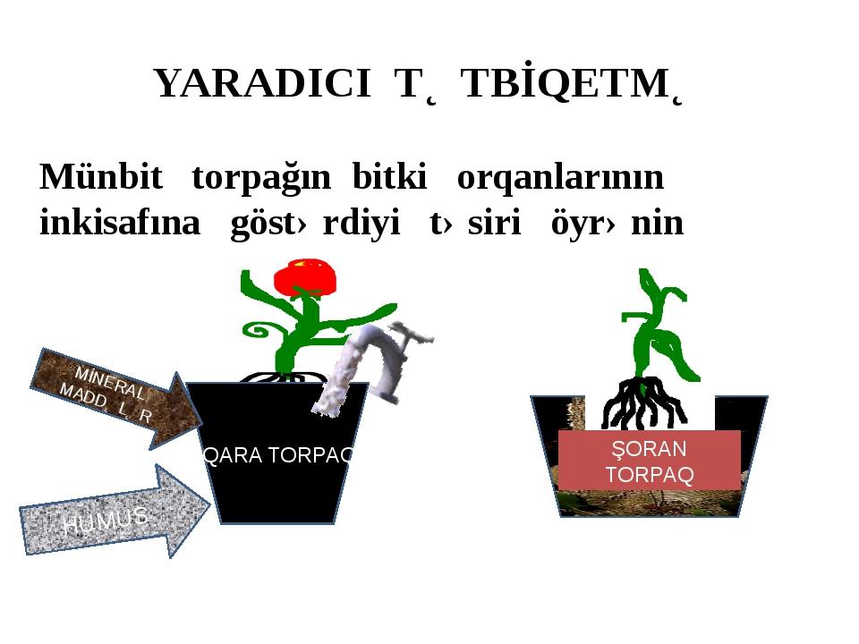 YARADICI TƏTBİQETMƏ Münbit torpağın bitki orqanlarının inkisafına göstərdiyi...