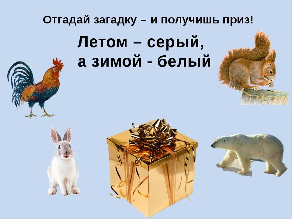 Отгадай загадку – и получишь приз! Летом – серый, а зимой - белый