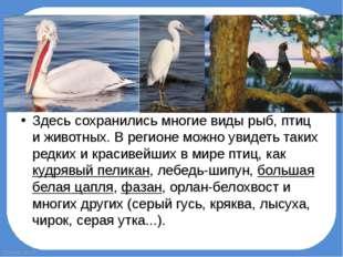 Здесь сохранились многие виды рыб, птиц и животных. В регионе можно увидеть т