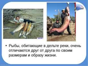 Рыбы, обитающие в дельте реки, очень отличаются друг от друга по своим размер