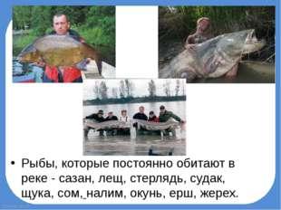 Рыбы, которые постоянно обитают в реке - сазан, лещ, стерлядь, судак, щука, с