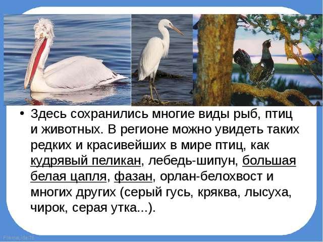 Здесь сохранились многие виды рыб, птиц и животных. В регионе можно увидеть т...