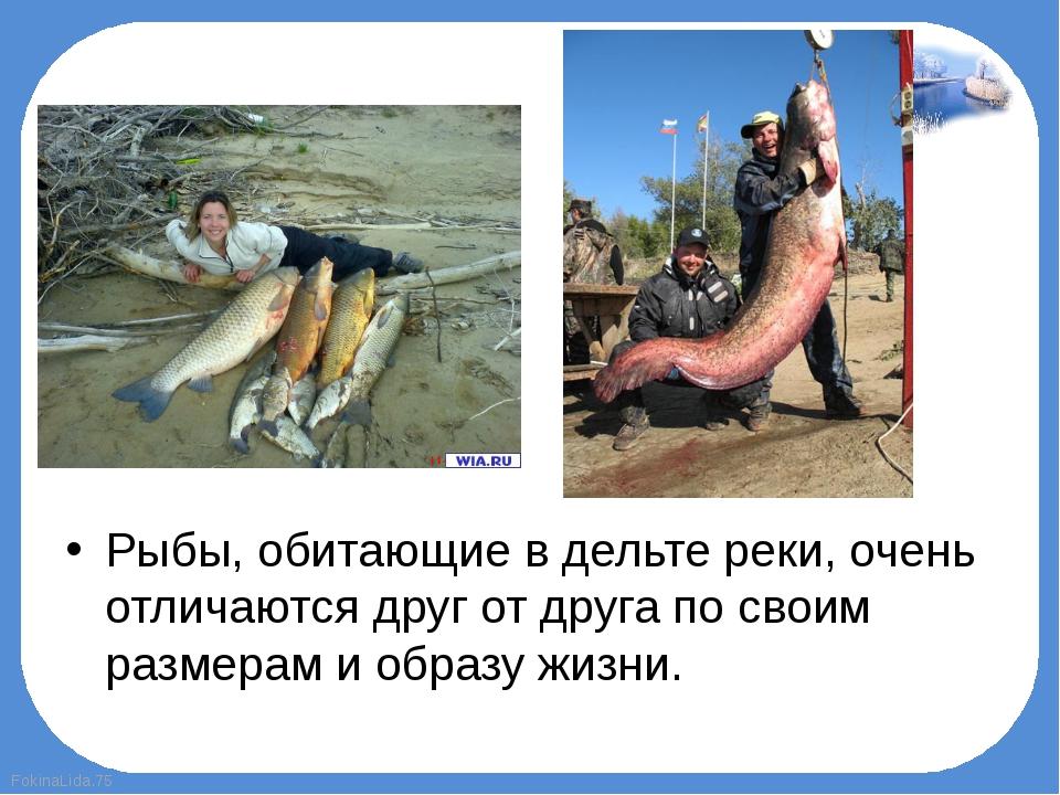 Рыбы, обитающие в дельте реки, очень отличаются друг от друга по своим размер...