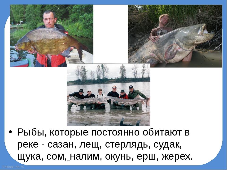 Рыбы, которые постоянно обитают в реке - сазан, лещ, стерлядь, судак, щука, с...
