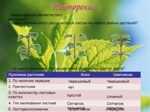 - Каким органом является лист растения? - Каким образом могут располагаться л