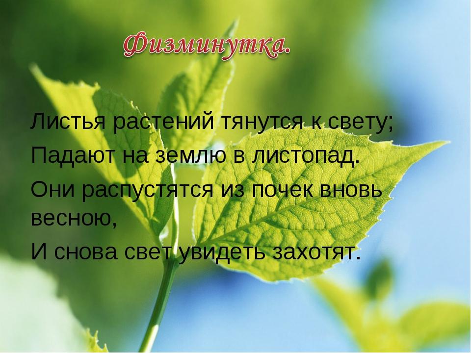 Листья растений тянутся к свету; Падают на землю в листопад. Они распустятся...