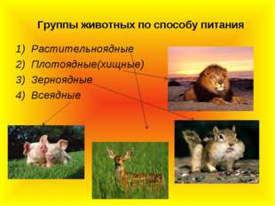 Группы животных по способу питания Растительноядные Плотоядные(хищные) Зерноя