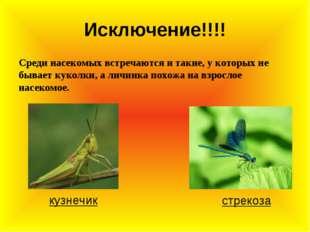 Исключение!!!! Среди насекомых встречаются и такие, у которых не бывает кукол