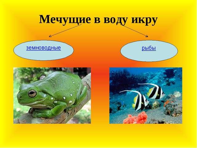 Мечущие в воду икру земноводные рыбы